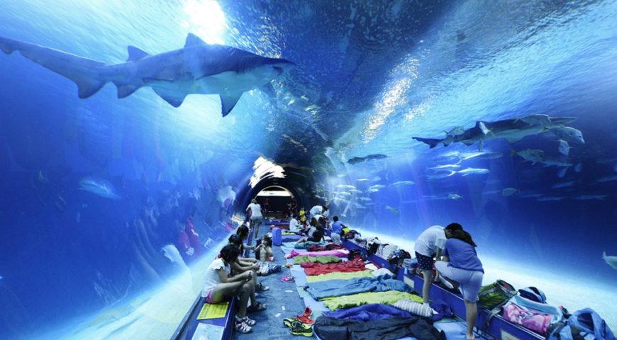 experiences-valencia-dormir-con-tiburones